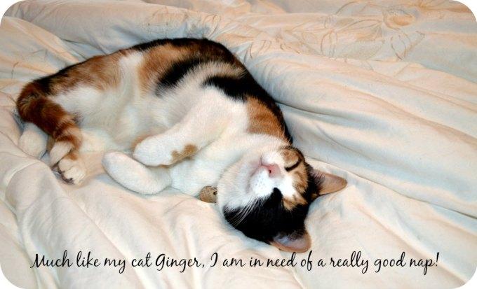 ginger nap